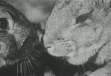 Still frame from: Adventures Of A Bunny Rabbit